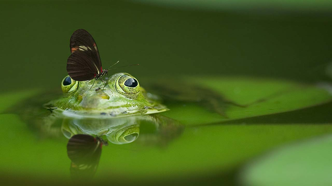 frog-540812