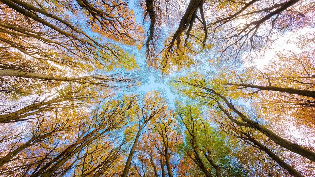 trees-5605176_1920